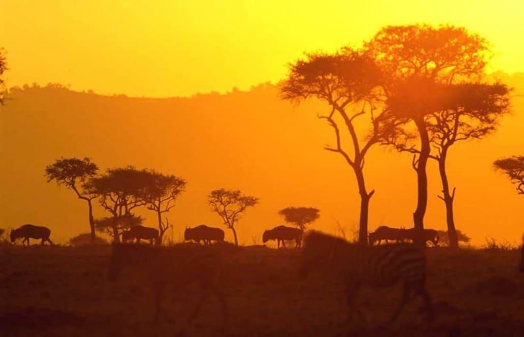 Lustrumreis naar Kenia! - Amboseli National Park