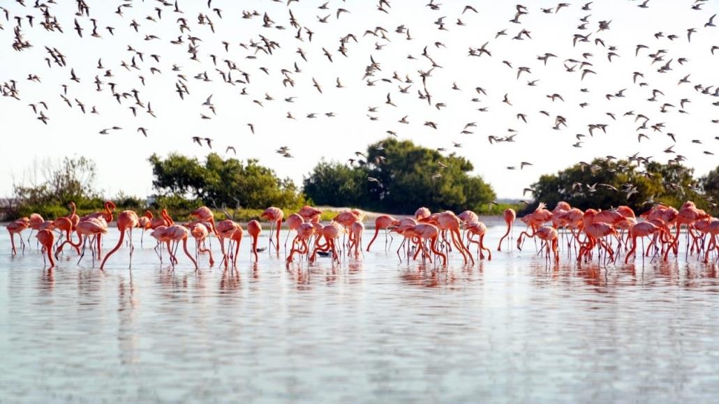 Lustrumreis Mexico! - Code roze: Rio Lagartos & Las Coloradas