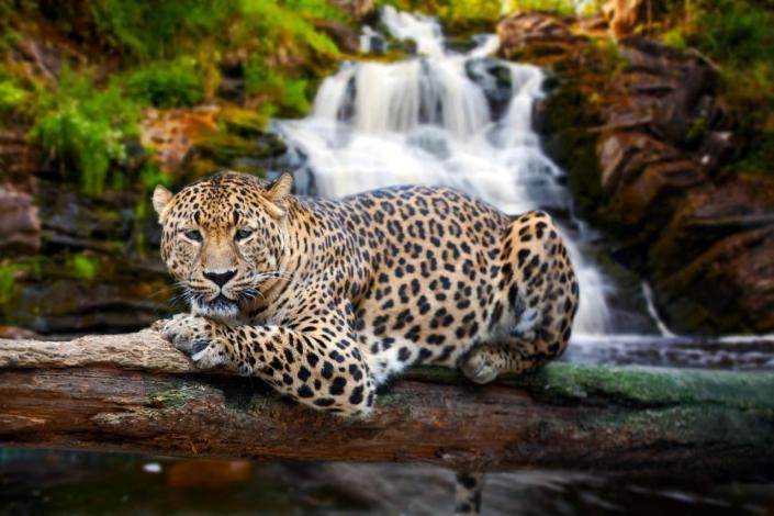 Lustrumreis Mexico! - Going Wild
