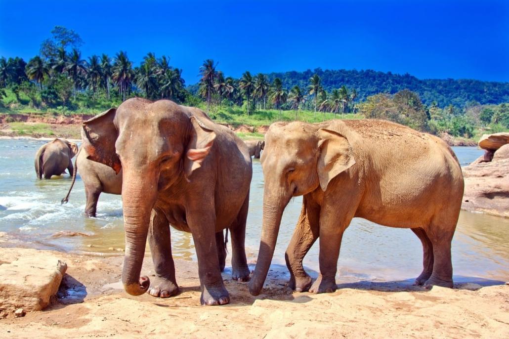 Lustrumreis Sri Lanka! - Hallo Jumbo