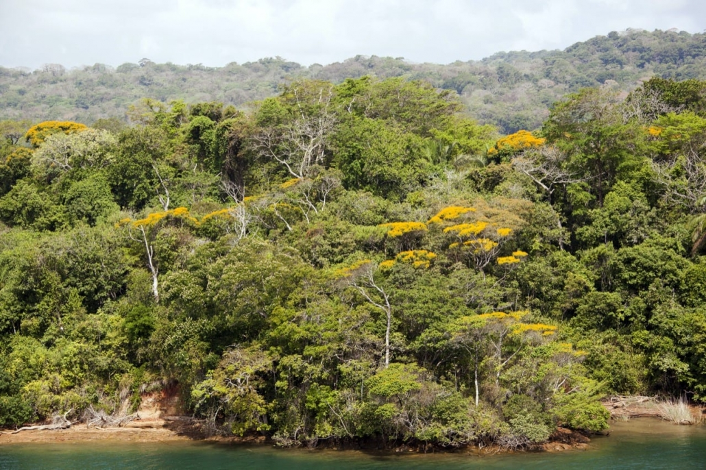 Lustrumreis naar Panama! - Jungle near the city