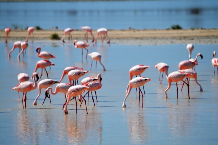 Roze bril @ Lake Navaisha