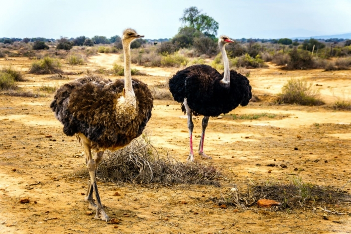 Struisvogelpolitiek