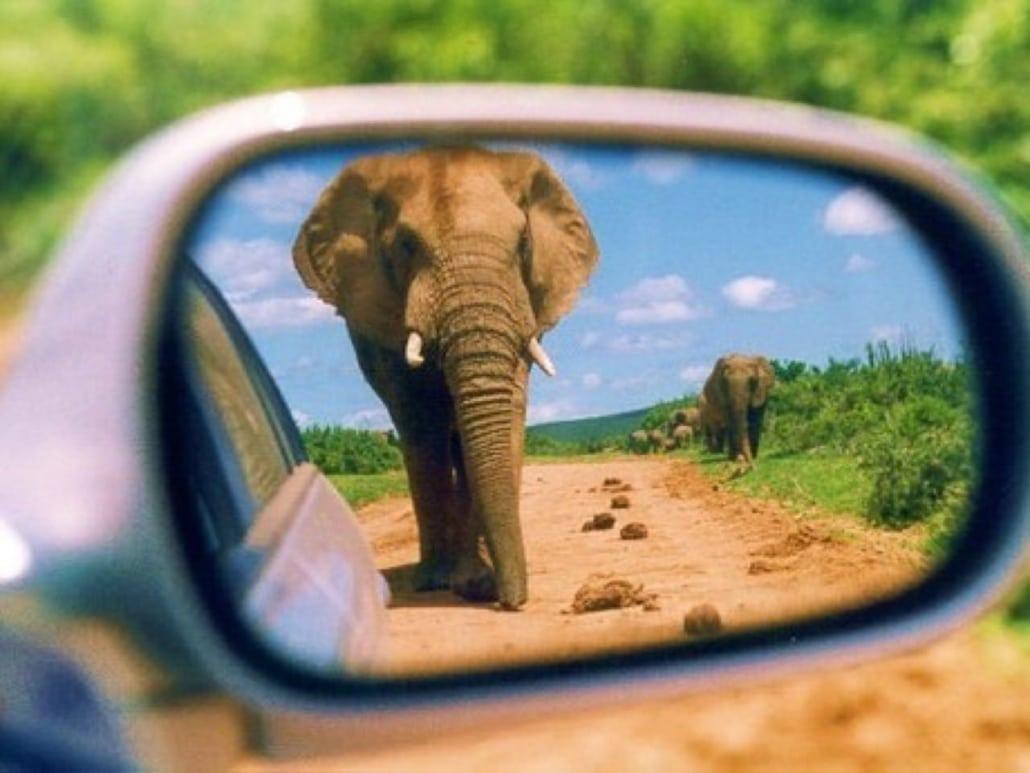Lustrumreis naar Kenia! - Taita Hills & Game Drive