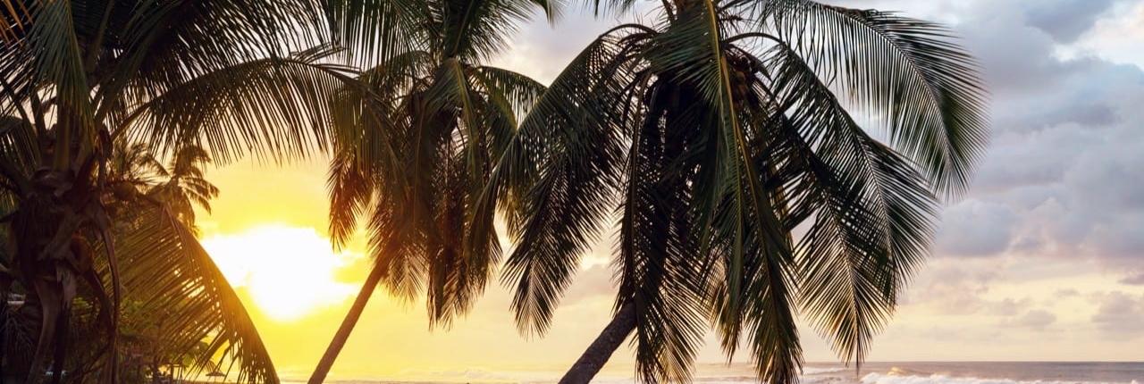 Vet Cool Costa Rica