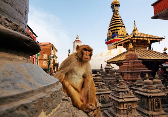 Voor aap in Swayambhunath - Lustrumreis Nepal!
