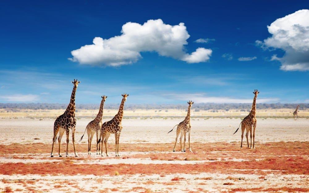 Lustrumreis Namibië - Game Drive @ Etosha National Park