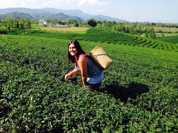 Lustrumreis naar Thailand - Thaise Thee
