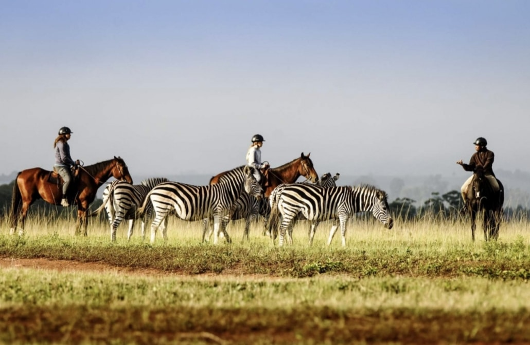 Lustrumreis naar Swaziland (Eswatini)! - Hlane Royal National Park (SWA)