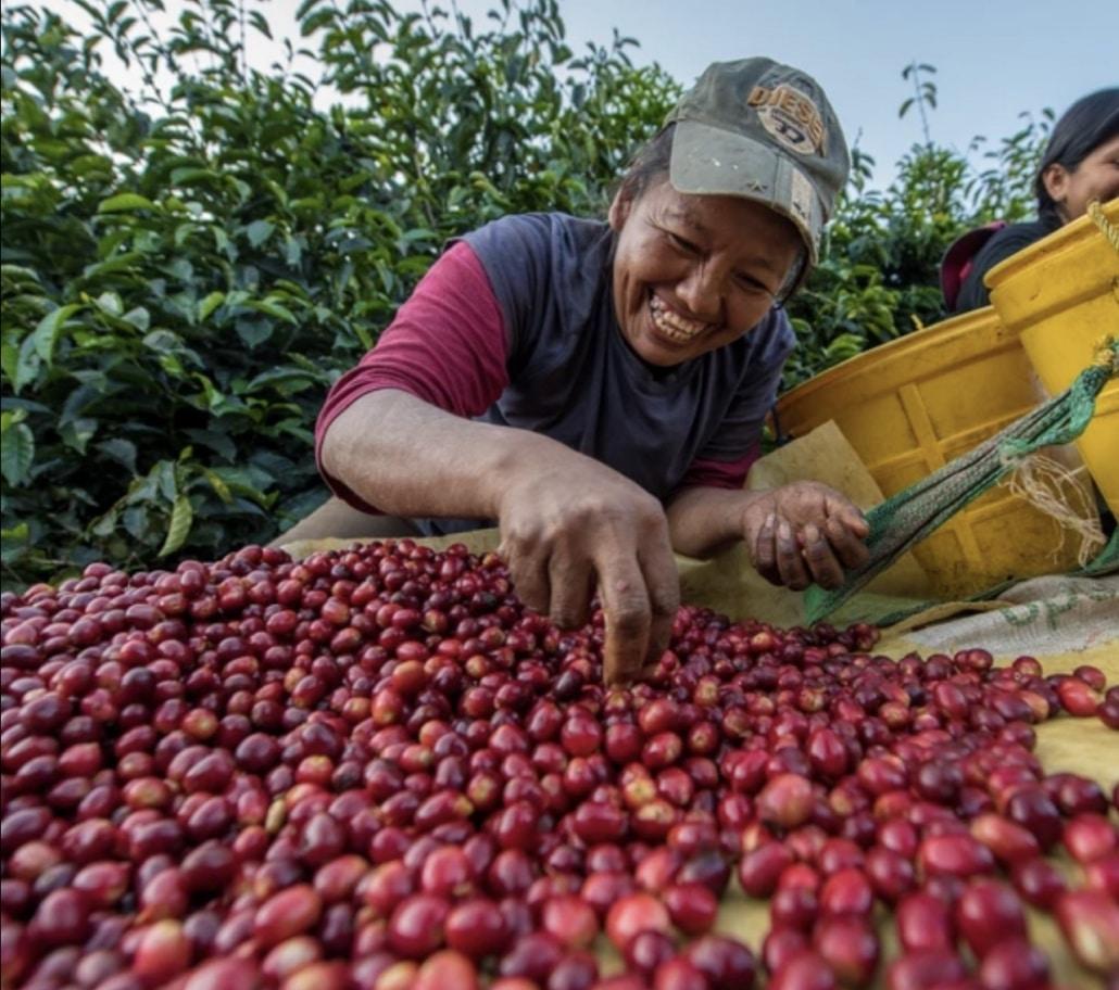 Lustrumreis Bolivia! - Koffie @ Coroico