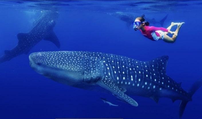 Lustrumreis naar Mozambique! - Onderwaterwalhalla Mozambique (MOZ)