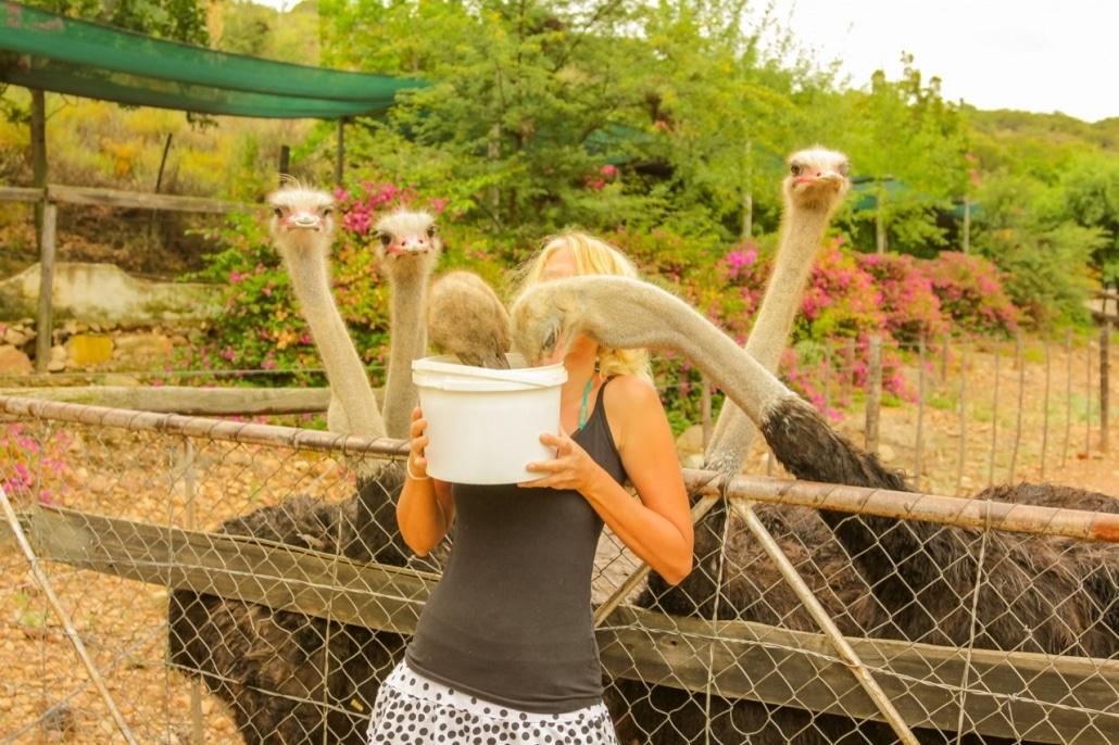 Lustrumreis naar Zuid-Afrika! - Struisvogelpolitiek