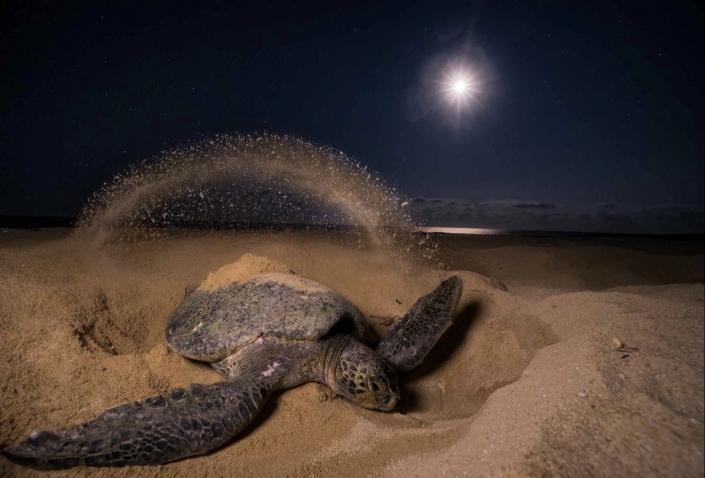 Lustrumreis Costa Rica! - Toffe Turtles @ Tortuguero National Park