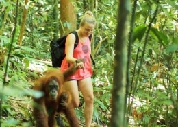 Lustrumreis naar Sumatra Indonesië! - Orang-Oetans: Yo, bro!